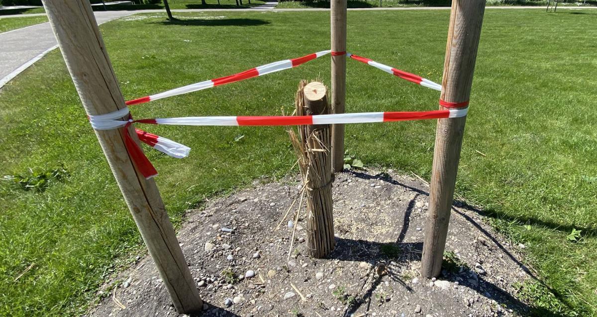 Vandalismus im Hallbergmooser Sportpark Unbekannte sägen Bäume ab - da hilft wohl nur noch Security